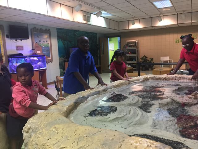 Students visiting the touch tank at Horizons Unlimited looking at starfish.